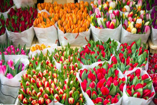 bunte tulpen blumen markt - günstig nach amsterdam stock-fotos und bilder