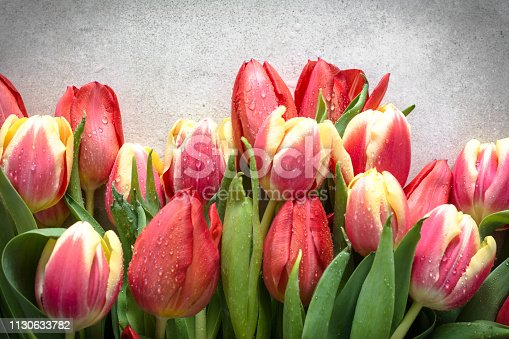 680461500istockphoto Colorful tulips bouquet, spring easter background, gift for mother's day or card for women's day 1130633782