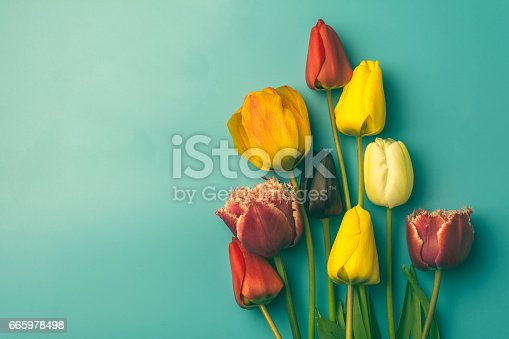 Colorful Tulips on a Vintage Background