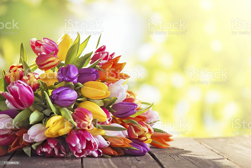 Colorful tulips on an old wooden table with nature background royalty-free stock photo