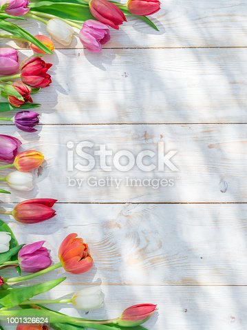 Colorful tulips on white wooden table in spring sunlights. Spring background.