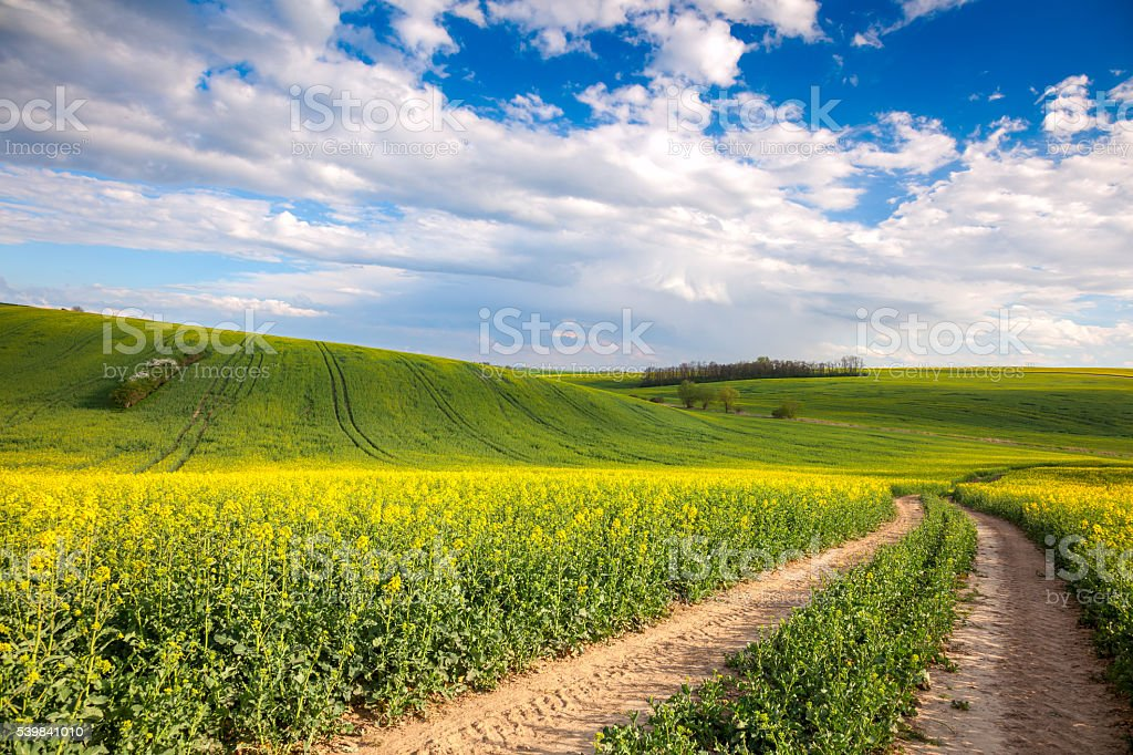 Colorful Valle - Yellow flowering fields and ground road overloo stock photo
