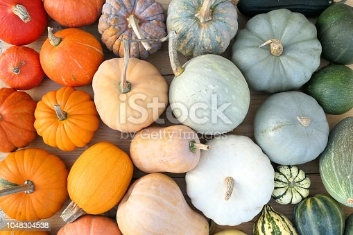 Colorful varieties of pumpkins and squashes. Color gradient composition