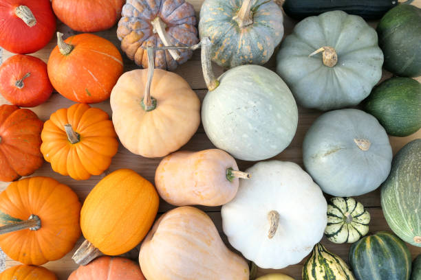Colorful varieties of pumpkins and squashe Colorful varieties of pumpkins and squashes. Color gradient composition squash vegetable stock pictures, royalty-free photos & images
