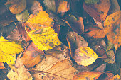 Colorful various fall leaves background