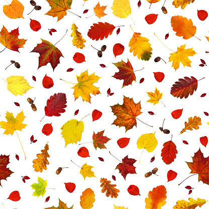 istock Colorful various fall leaves, physalis lanterns (Physalis alkekengi), dog-rose fruits and acorns collage seamless pattern (wallpaper) isolated on white 1163041510