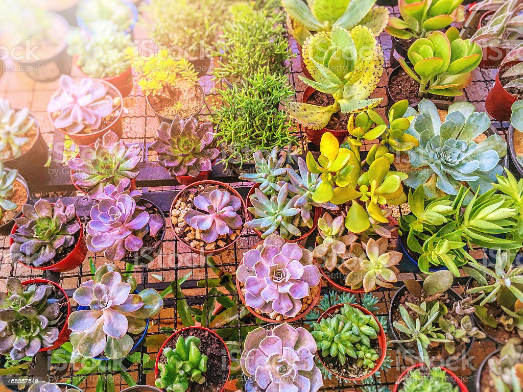 Colorful vessels of succulents on the indoor garden. royalty-free stock photo