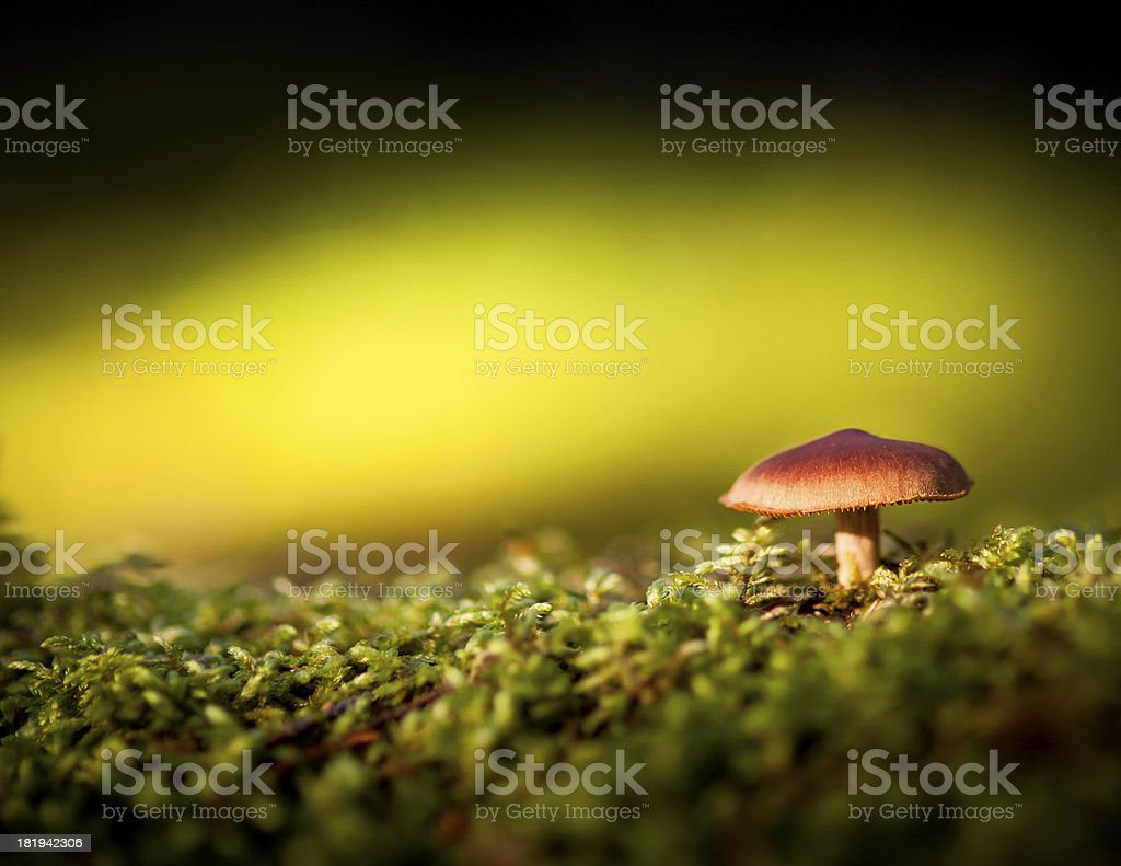 Colorful view of a mushroom and moss royalty-free stock photo