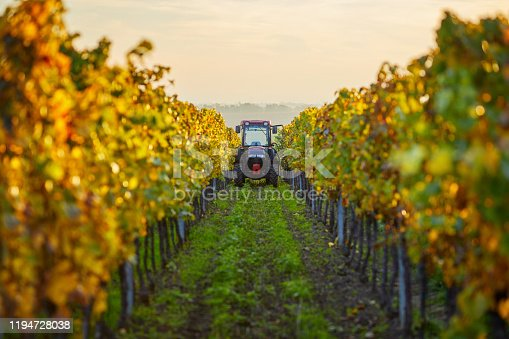 istock Colorful vineyard in autumn day with tractor 1194728038