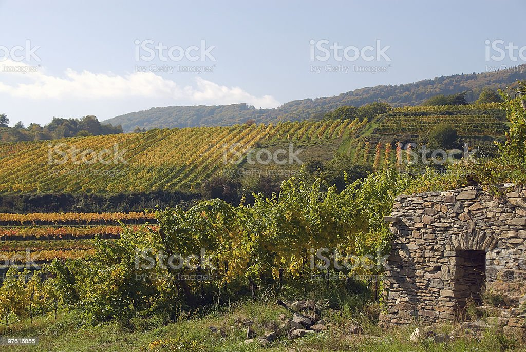 Colorful vineyard in the mountains of Austria royalty-free stock photo