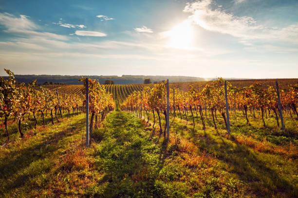 Coloridos viñedos de Moravia del sur - foto de stock
