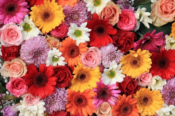 Colorful wedding flower arrangement Mixed flower arrangement for a wedding: roses and gerberas in pink, yellow and red flowers stock pictures, royalty-free photos & images