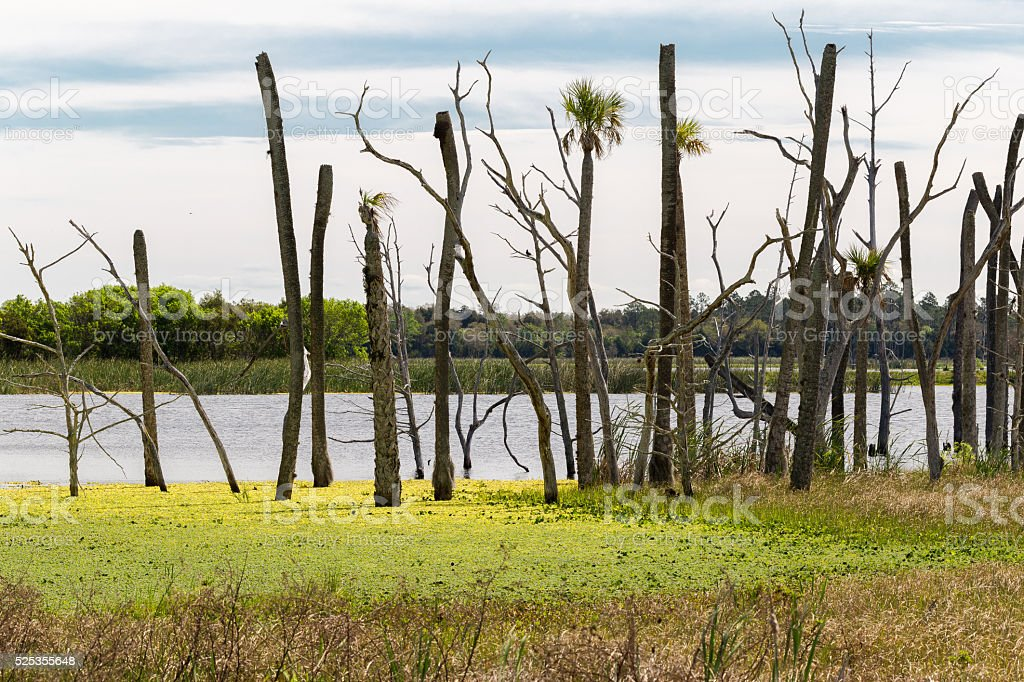 Colorful Wetlands Landscape In Florida stock photo
