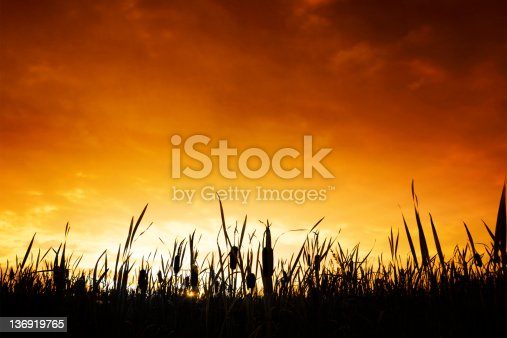 wetlands in silhouette at colorful sunset (XL)