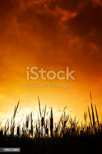wetlands in silhouette at colorful sunset, vertical frame (XXL)