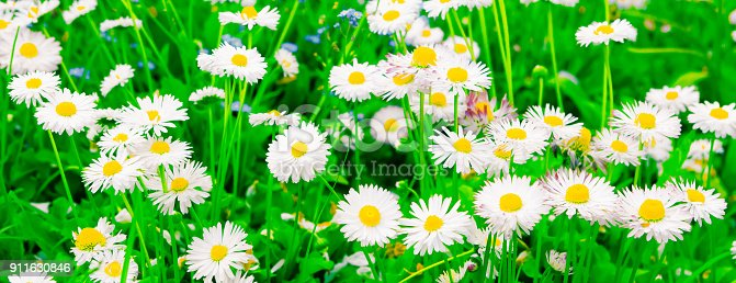 997750962 istock photo Colorful Wide Screen Nature Spring Background 911630846