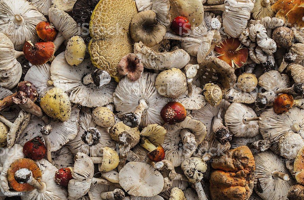 Colorful wild mushrooms stock photo