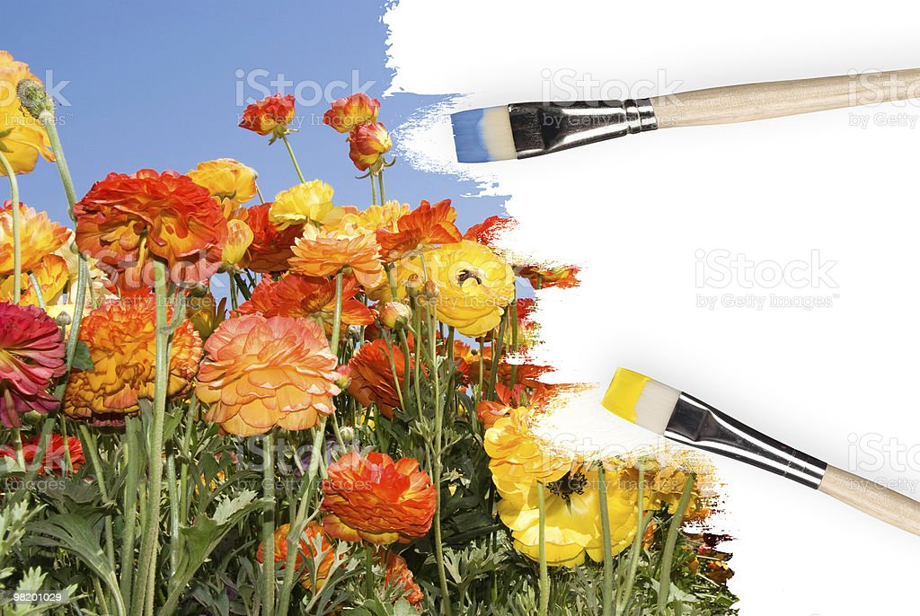 Colorful wildflowers painted in white canvas royalty-free stock photo