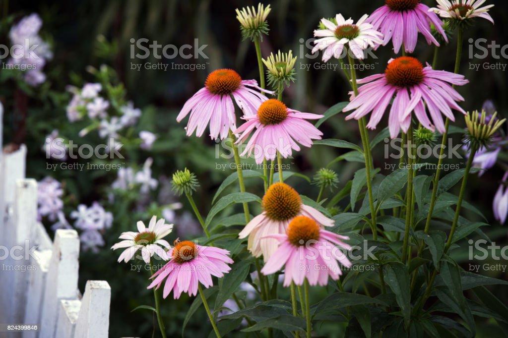 colorful wildflowers stock photo