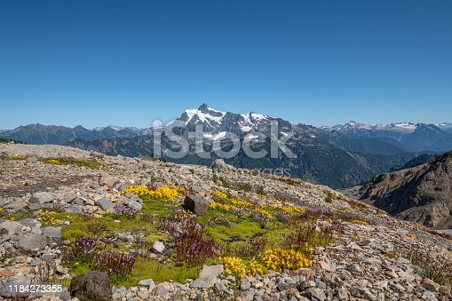 Bright green moss together with yellow and purple flowers covers a rocky area beside Mount Baker's Ptarmigan Ridge trail.  In the distance, Mount Shuksan sits proudly above other mountains of the North Cascades range.  Ample blue sky provides space for text.