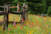 Colorful Wildlowers in Alpine Flower Meadow with Wood Fence. Vivid, vibrant colors.