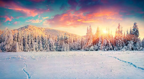 panorama colorido de inverno no Carpathian montanhas. - foto de acervo