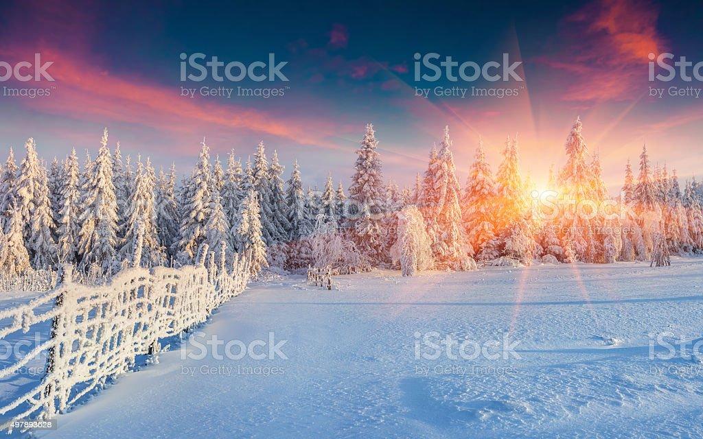 Bunte winter panorama der Carpathian die Berge. – Foto