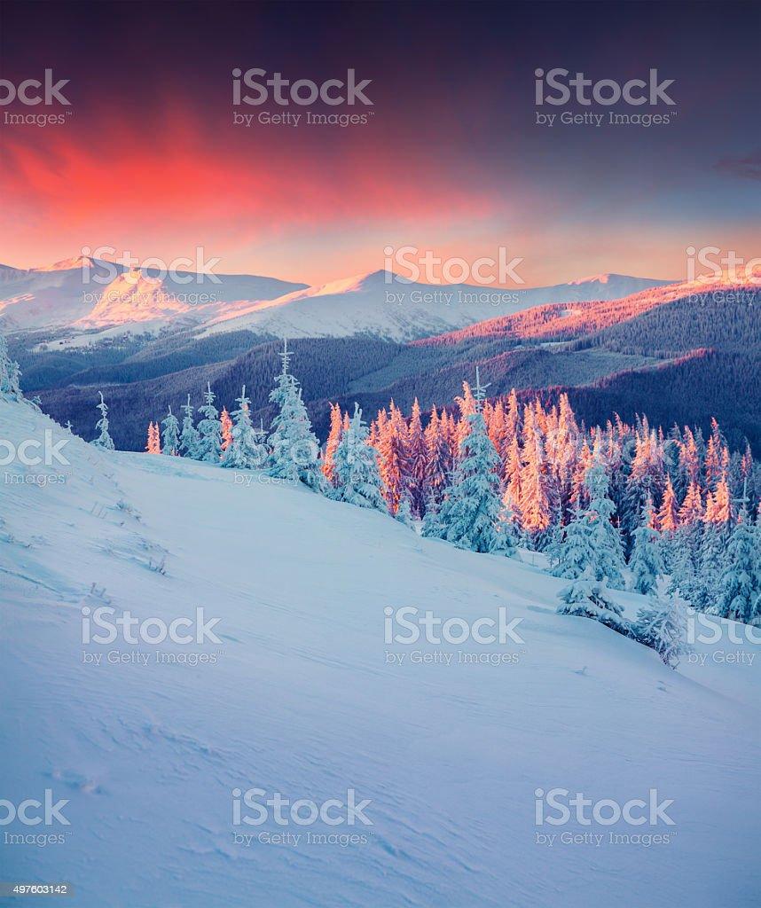 Bunte winter Szene im Carpathian die Berge. – Foto