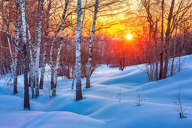 Colorful winter sunset stock photo