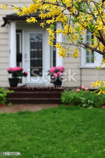 Spring flowers framing a residential house on a rainy day. Shallow depth of field with focus on the forsythia flowers
