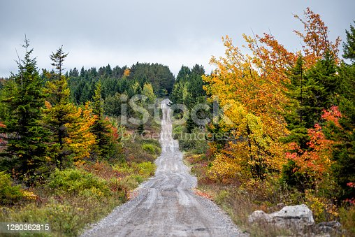 istock Colorful yellow foliage in autumn fall in Dolly Sods in West Virginia in National Forest Park with dirt road path straight driving point of view 1280362815