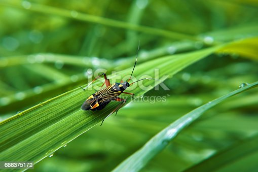 istock Colorfull bug at green grass 666375172