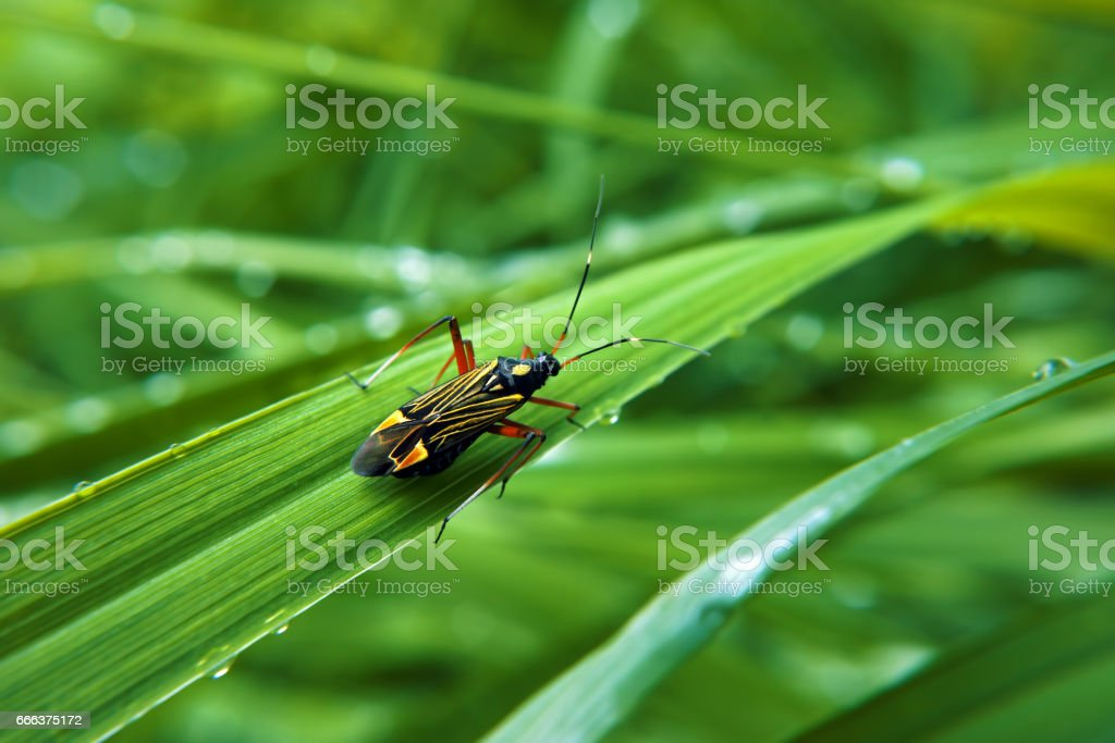 Colorfull bug at green grass stock photo