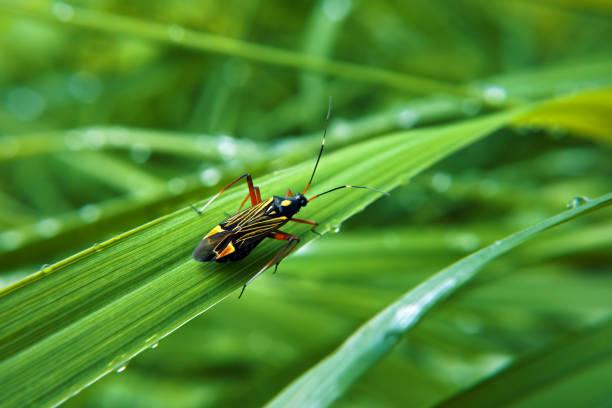 colorfull bug à l'herbe verte - insecte photos et images de collection