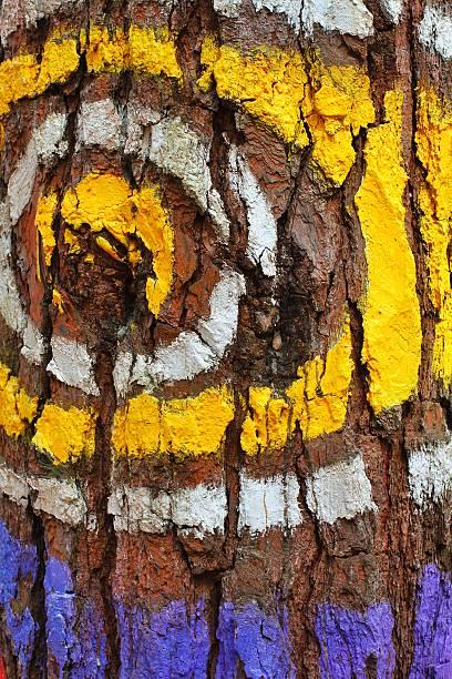 Colorfull eye – Foto