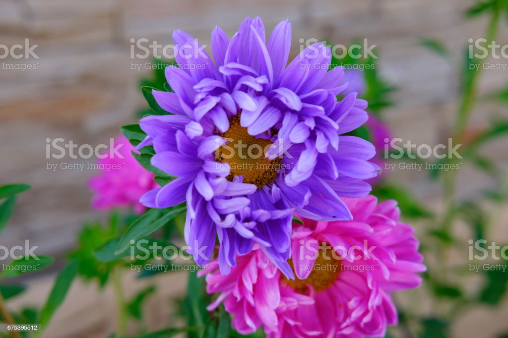 colorfull flowers and roses collection photo libre de droits