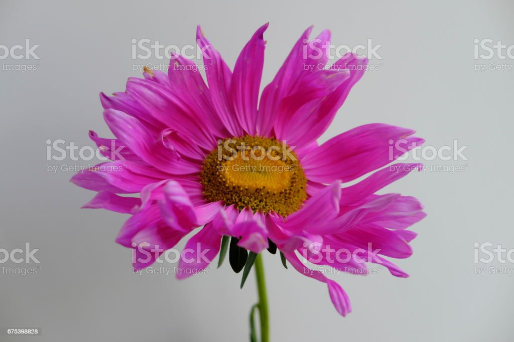 colorfull flowers and roses collection royalty-free stock photo
