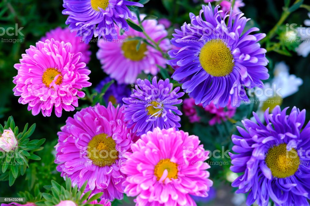 colorfull flowers and roses collection45 photo libre de droits