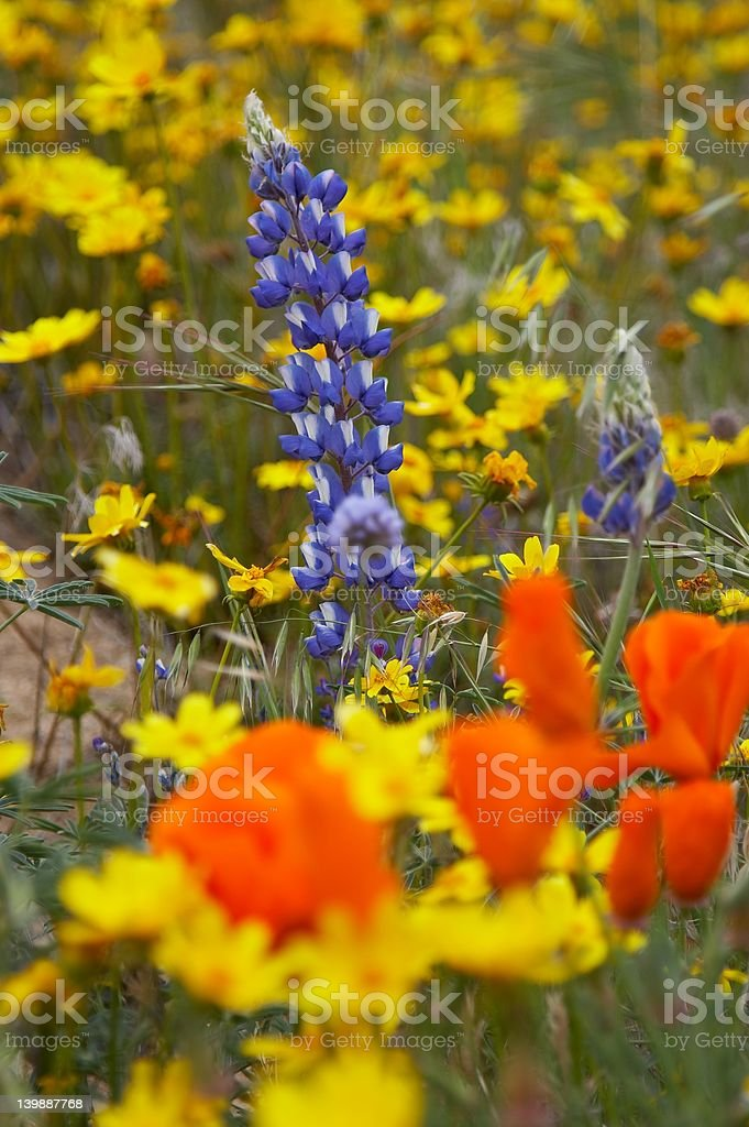 Colorfull flowers royalty-free stock photo