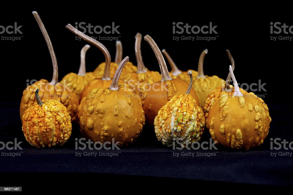 color-full little pumpkins royalty-free stock photo