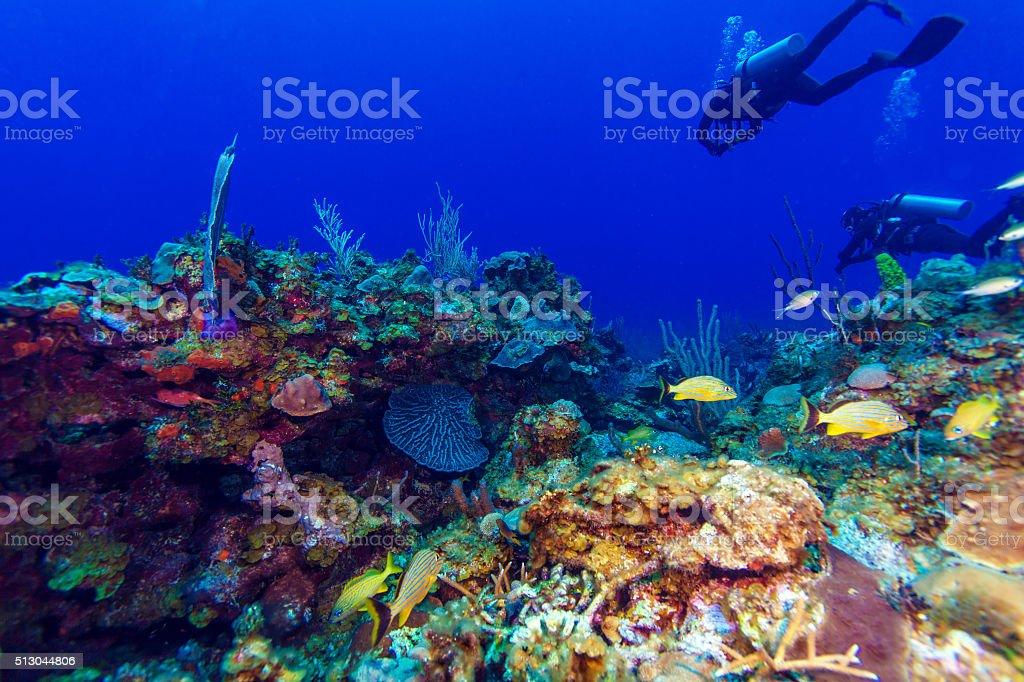 Colorfull Coral y grupo de buzos, Cayo Largo, Cuba - foto de stock