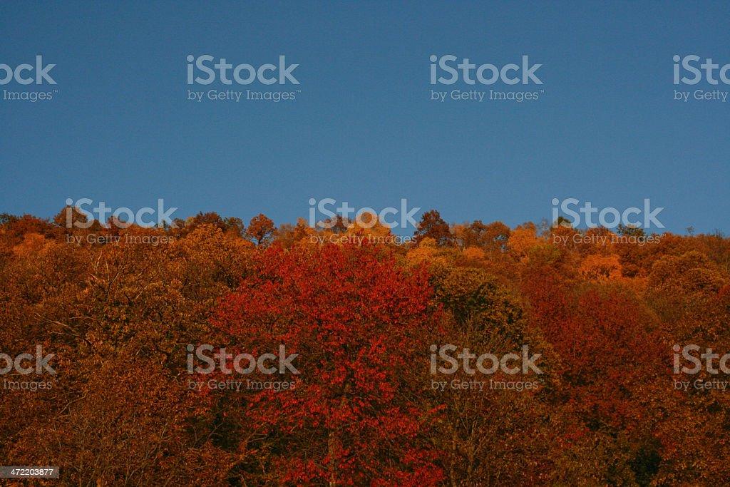 I colori dell'autunno stock photo