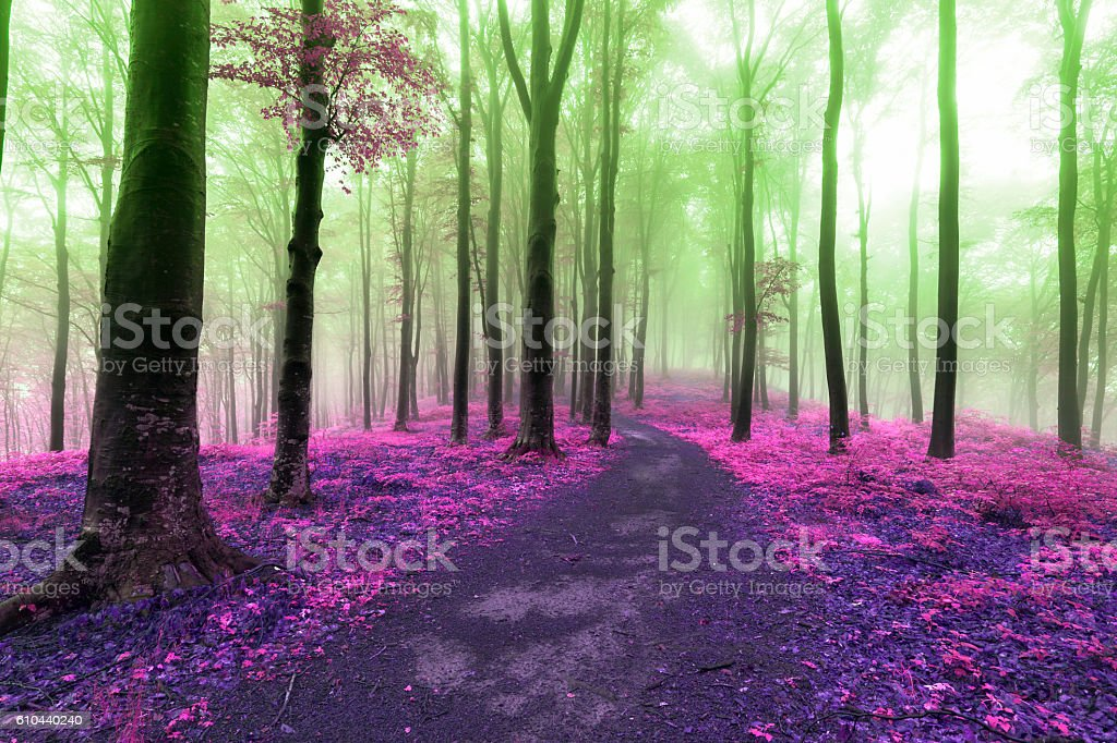Colors of a dreamy foggy forest stock photo