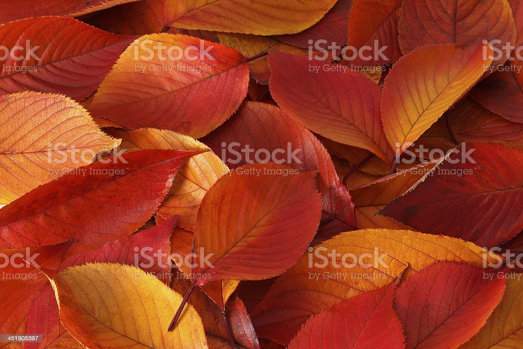 Colors of Autumm royalty-free stock photo