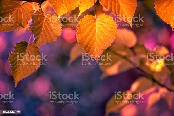 Photo of Colors of autumn