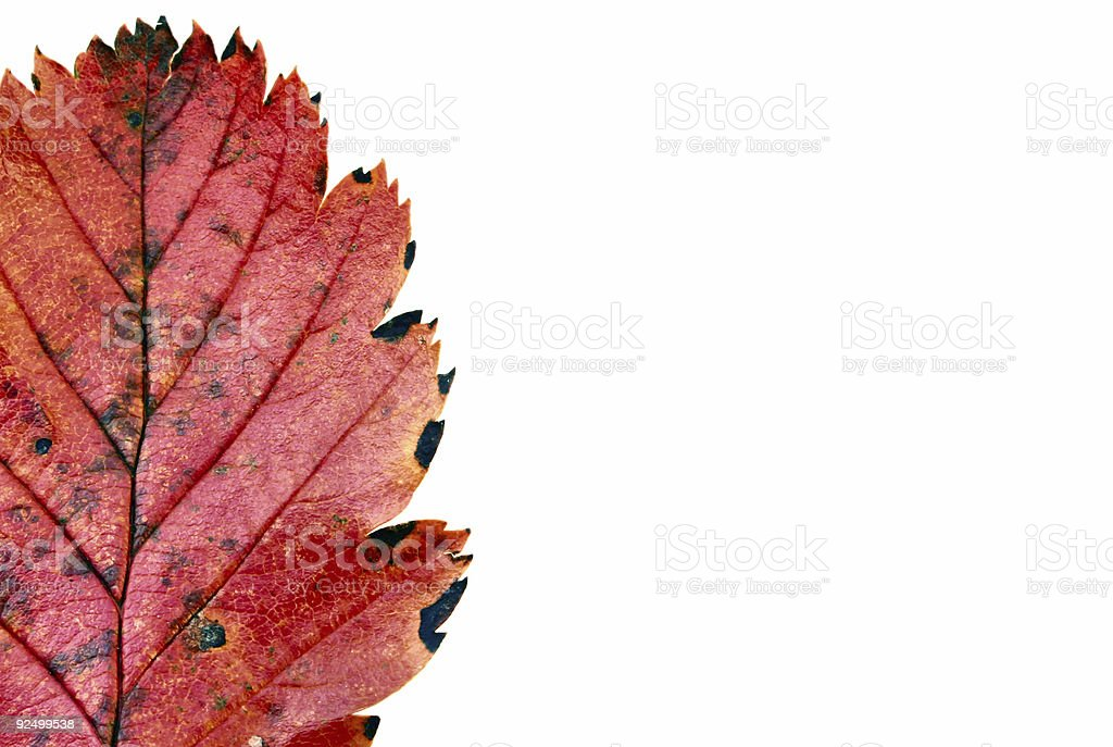 colors of autumn #11 royalty-free stock photo