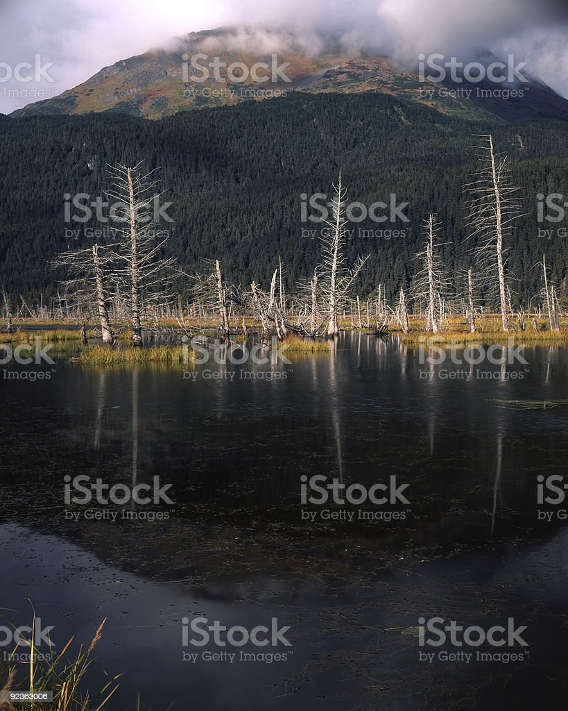 Colors of early fall royalty-free stock photo