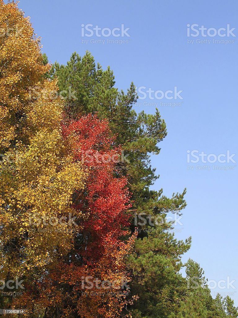 Colors of Fall royalty-free stock photo