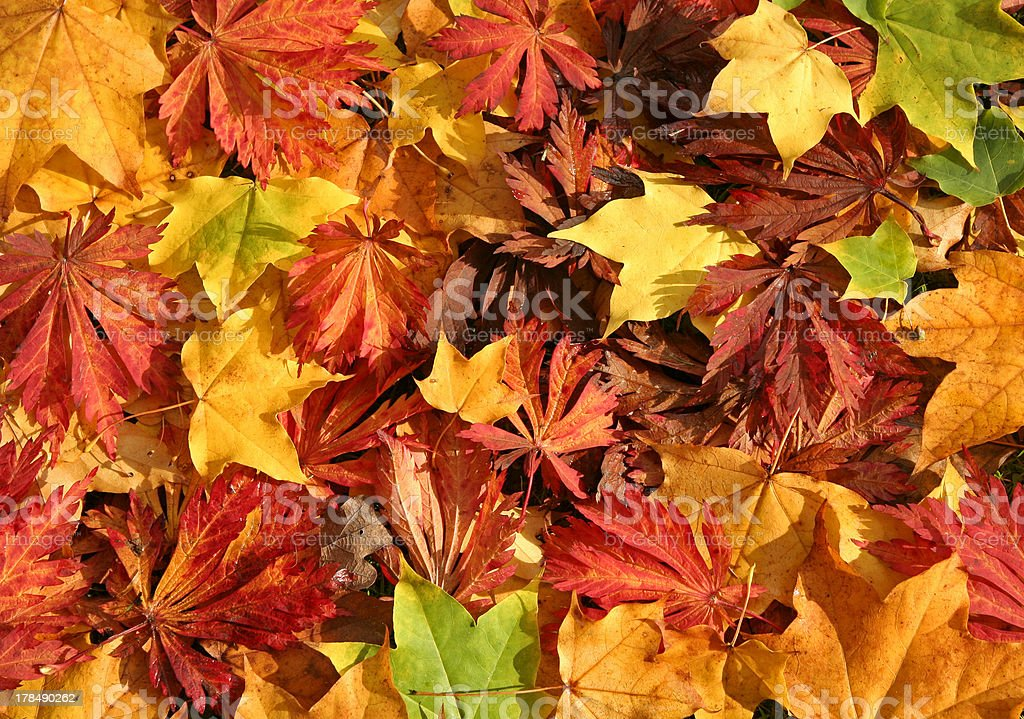 Colors of Fall stock photo