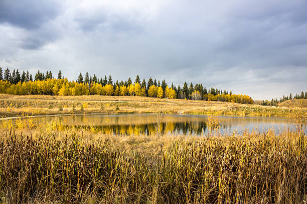colors of fall season at fish creek park calgary - provincial park stock photos and pictures